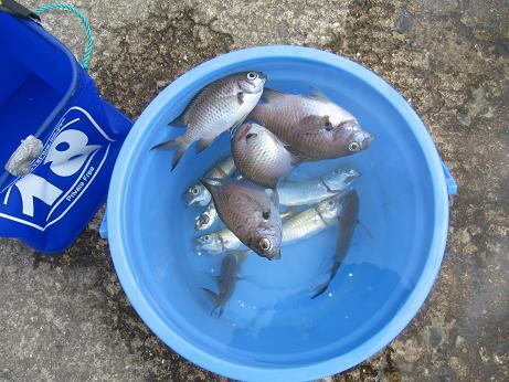魚種ワカリマセン